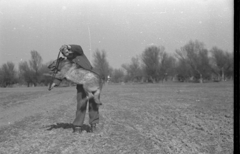 Обука стражарских паса 1952.